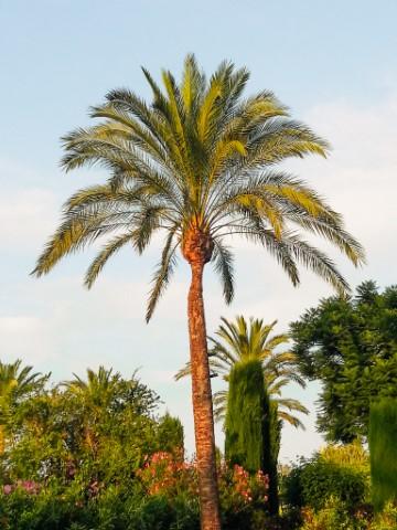 Online zichtbaarheid | Palmboom effect